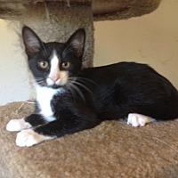 Adopt A Pet :: Banjo - Santa Rosa, CA