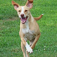 Adopt A Pet :: Sallie - Savannah, TN