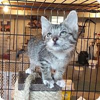 Adopt A Pet :: Rizzo - Geneseo, IL