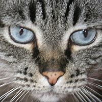 Adopt A Pet :: Miss - Republic, WA