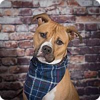 Adopt A Pet :: Chip - Greensboro, NC