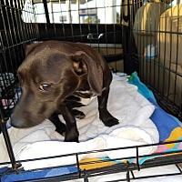 Adopt A Pet :: Angeline - Lubbock, TX