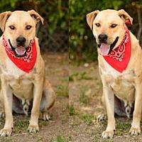 Adopt A Pet :: COMA - Chatsworth, CA