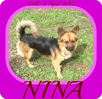 Corgi/German Shepherd Dog Mix Dog for adoption in Jersey City, New Jersey - NINA