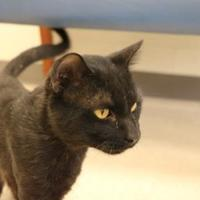 Adopt A Pet :: Sebastian - Evansville, IN