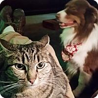 Adopt A Pet :: Lily - San Dimas, CA