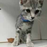 Adopt A Pet :: Bruce - Maumee, OH