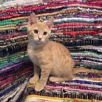 Adopt A Pet :: Twix -Adoption Pending! - Colmar, PA