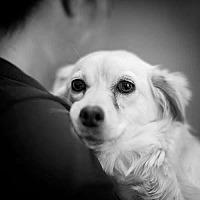 Adopt A Pet :: GABRIELLA - Severance, CO