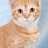 Adopt A Pet :: Mattie - Encinitas, CA