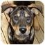 Photo 1 - Rottweiler/Shepherd (Unknown Type) Mix Dog for adoption in Olive Branch, Mississippi - Gangsta-THUG!