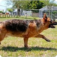 Adopt A Pet :: Bella - Green Cove Springs, FL