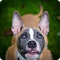 Adopt A Pet :: Willie - Seattle, WA