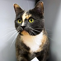 Adopt A Pet :: Lacy - Woodside, NY