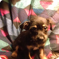 Adopt A Pet :: Mari - Chandler, AZ