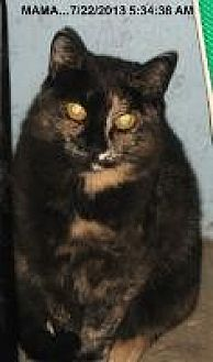 Domestic Shorthair Cat for adoption in Brainardsville, New York - Mama