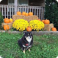 Adopt A Pet :: Toby - Shawnee Mission, KS