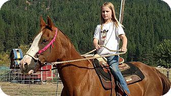 Quarterhorse for adoption in Greenville, California - Izzy