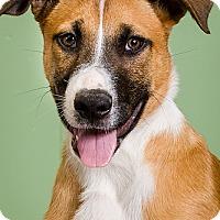 Adopt A Pet :: Bandit - Owensboro, KY