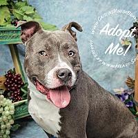 Adopt A Pet :: Rusty - Marietta, GA