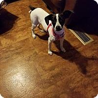 Adopt A Pet :: Jackie - Osteen, FL