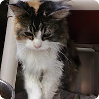 Adopt A Pet :: Gigi - Chippewa Falls, WI