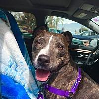 Adopt A Pet :: Tommy - San Juan Capistrano, CA
