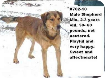 Shepherd (Unknown Type) Mix Dog for adoption in Zanesville, Ohio - # 702-10 @ Animal Shelter