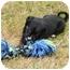 Photo 1 - German Shepherd Dog Mix Puppy for adoption in Portland, Oregon - Dylan McKay