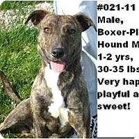 Adopt A Pet :: # 021-11 - ADOPTED! - Zanesville, OH