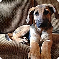 Adopt A Pet :: Ami - Hagerstown, MD