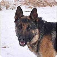 Adopt A Pet :: Yager - Hamilton, MT