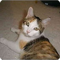 Adopt A Pet :: Hannah - Proctor, MN