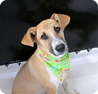 Collie Mix Dog for adoption in Minneapolis, Minnesota - Ella