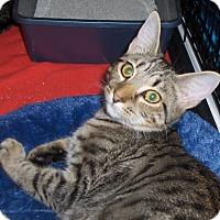 Adopt A Pet :: Spice - Richmond, VA
