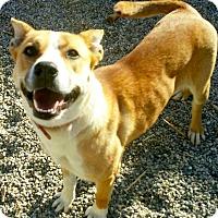 Adopt A Pet :: ROZZY - Valley Village, CA