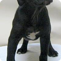 Adopt A Pet :: Pluto - Gary, IN