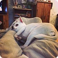 Adopt A Pet :: Dexter (dog) - Carey, OH