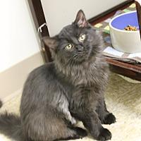 Adopt A Pet :: Minnow - Medina, OH