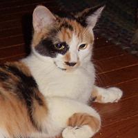 Adopt A Pet :: Becca - Evans, WV