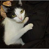 Adopt A Pet :: Rosie - Watkinsville, GA