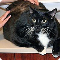 Adopt A Pet :: Sadie - Wildomar, CA