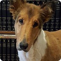 Adopt A Pet :: Doyle - Garner, NC