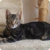 Adopt A Pet :: Subaru - Seminole, FL
