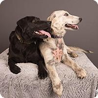 Adopt A Pet :: Zara - Salem, OR