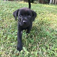 Adopt A Pet :: Melvin - Albertville, MN