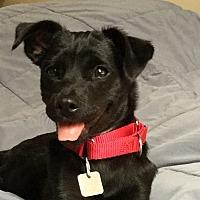 Adopt A Pet :: KARA - Albany, NY