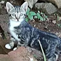 Adopt A Pet :: Shelby - Petersburg, VA