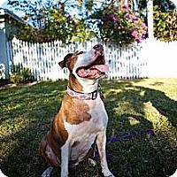 Adopt A Pet :: Maya - Lake Worth, FL