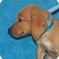 Adopt A Pet :: Ace - Phillips, WI